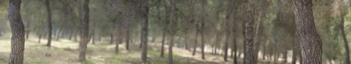 Lahav Forest