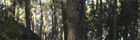 XH12452 Beit Shemesh Forest thumbnail