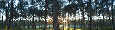 XH16105 Ben Shemen forest thumbnail